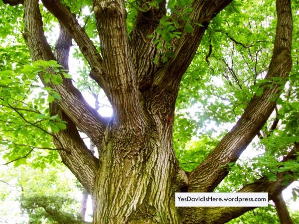 TreeBranch1
