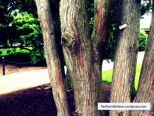 TreeBranch3